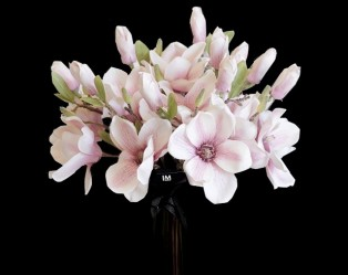 Valentine Day Cymbidium Orchid Set Elegant Home Decor