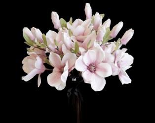 Valentine Day Cymbidium Orchid Set Elegant Home Decor