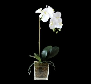 Lunar New Year Orchid Set Elegant Home Decor